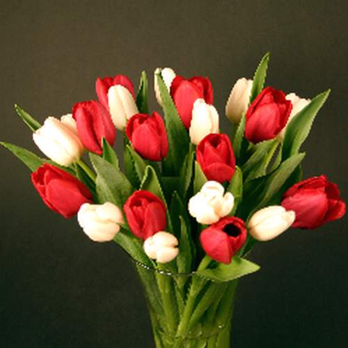 3d Wallpapers For Nokia E63 Cool Images Red And White Tulip