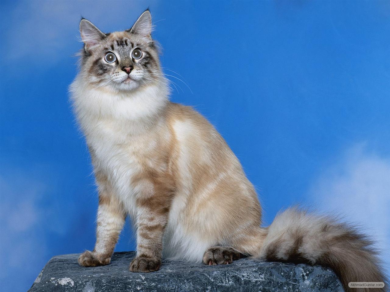 Perawatan Kucing Gambar Kucing Lucu Sedang Berpose
