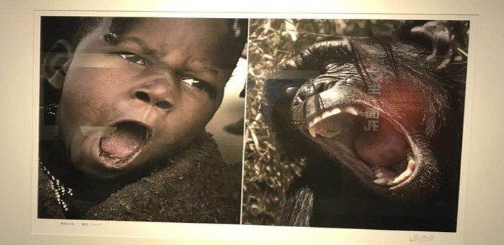 Rasis! Orang Afrika Disamakan dengan Monyet, Museum di China Jadi Sasaran Amuk Netizen
