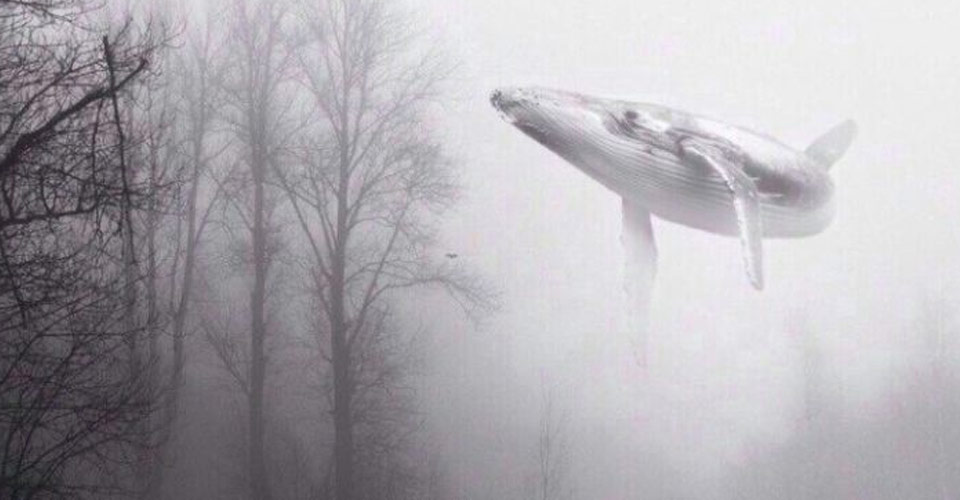 Here's How The 'Blue Whale' Suicide Game Is Killing Teens On Social Media