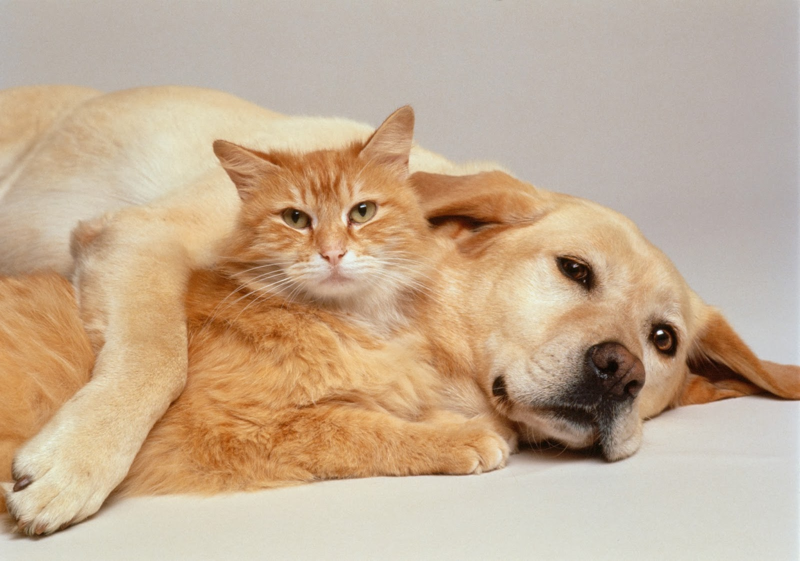 Animals Zoo Park Cute Cat With Cute Dog Wallpapers 4