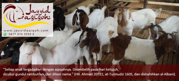 Jasa Aqiqah Di CIledug ~ Cipondoh ~ Tangerang
