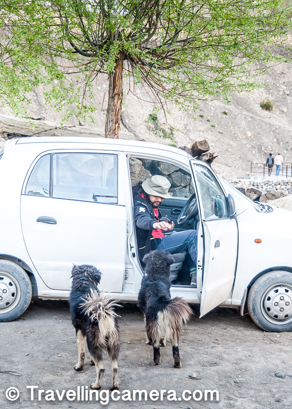 We packed our bags early in the morning and Varun is saying bye to dogs we met in Kaza. He seemed to be a dog lover and these folks were following him everywhere. We just had tea before leaving our guest house and plan was to have breakfast in the market before leaving for Kye Monastery.