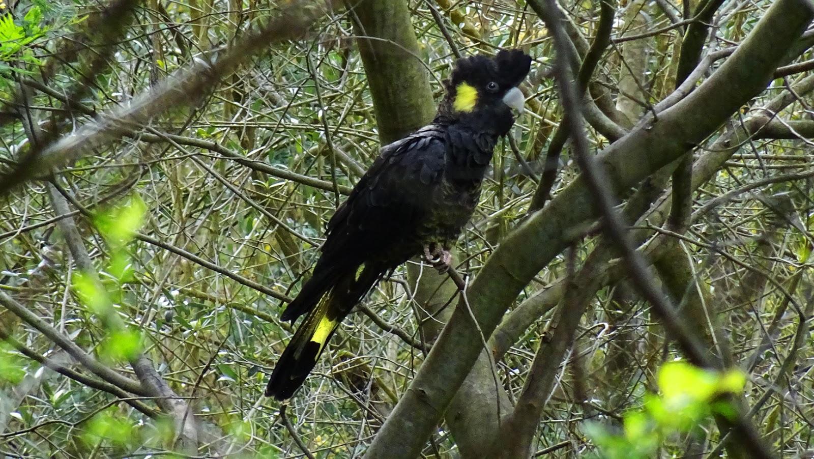 BirdLife Australia - Home | Facebook
