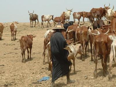 Killings: Federal Govt Stops Movement of Herdsmen