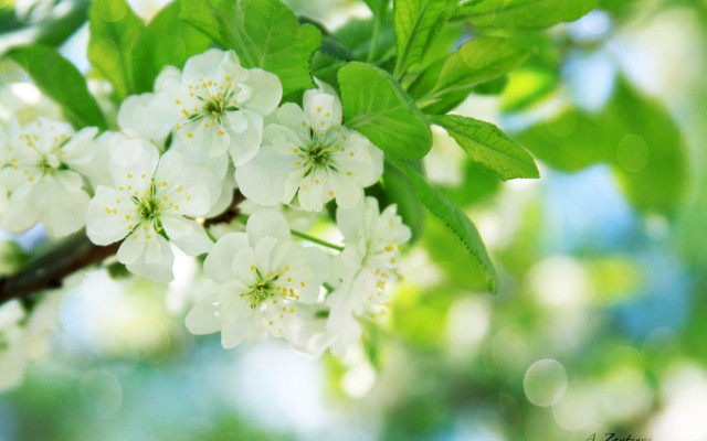 Windows 8 White Flower Wallpaper