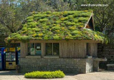 Techo ecológico con plantas vivas