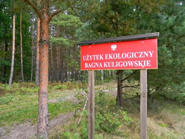 Babimost i okolice, ciekawe miejsca koło Babimostu, rezerwaty przyrody