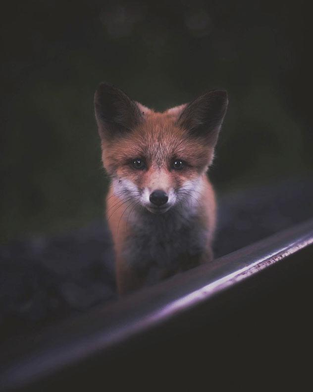 Momentos espontáneos con criaturas del bosque fotografiados por Konsta Punkka