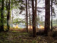 Incêndio Para TRF1 IBAMA pode autuar degradação mesmo com Cadastro Ambiental Rural.