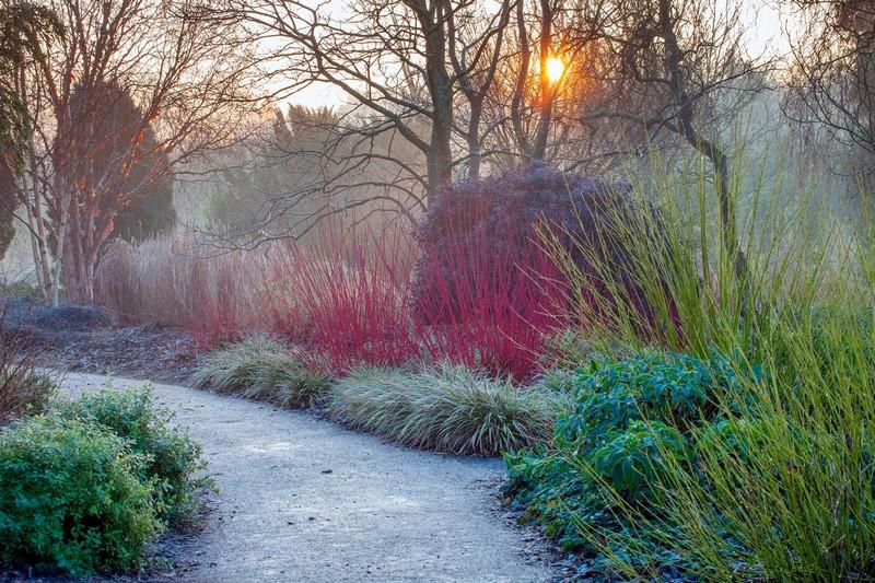 Jardín de invierno en Sir Harold Hillier Gardens