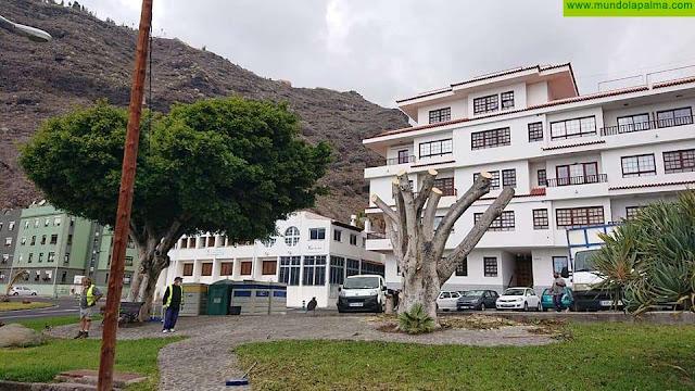 El Ayuntamiento de Tazacorte continúa con el operativo de recuperación y mantenimiento de zonas verdes