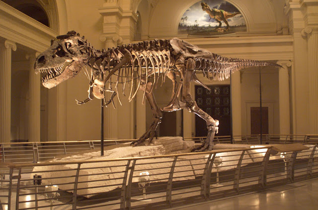 Why did T. Rex have such small arms?