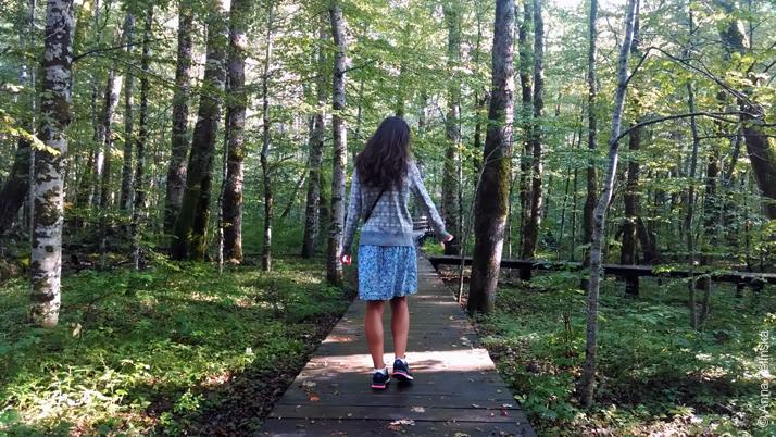 Лиственный лес, Биоградска Гора, Черногория