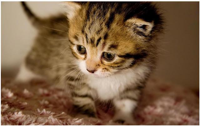 صور خلفيات لحيوانات صغيرة جميلة HD