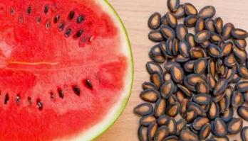 Maintenance Watermelon Seed