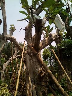 http://tukangtaman123.blogspot.com/