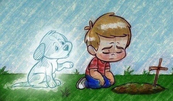 losing dog