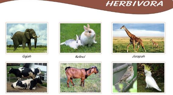 5100 Gambar Hewan Berikut Makanannya Gratis