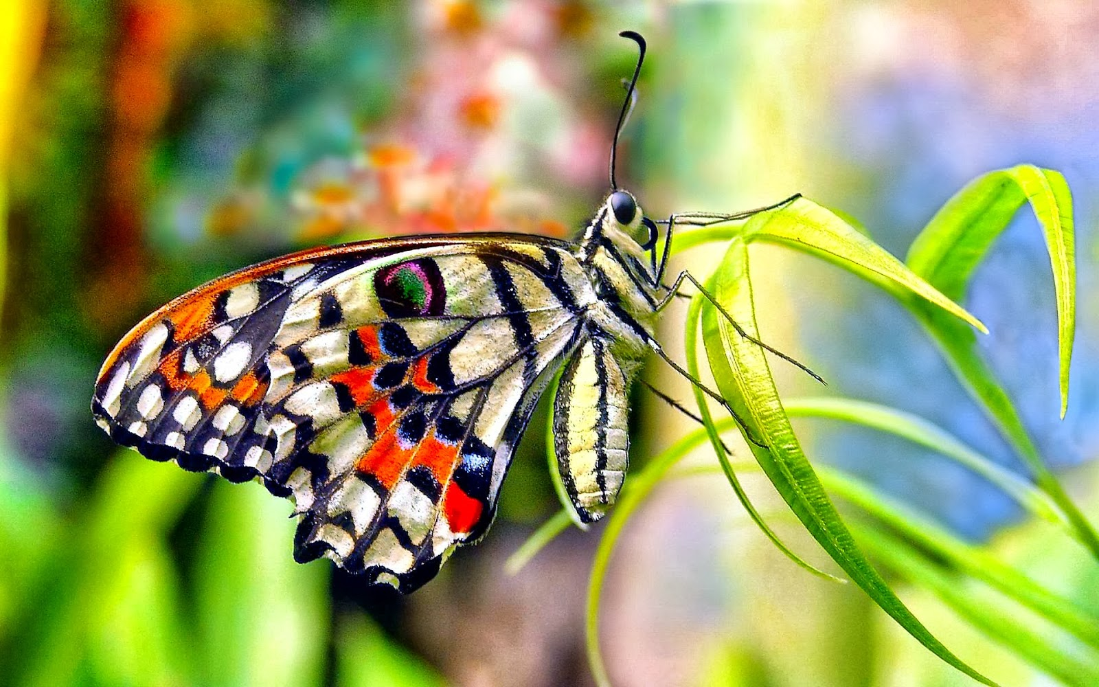 10 Beautiful Butterfly Wallpapers Hd Free Download 2018 Blogland