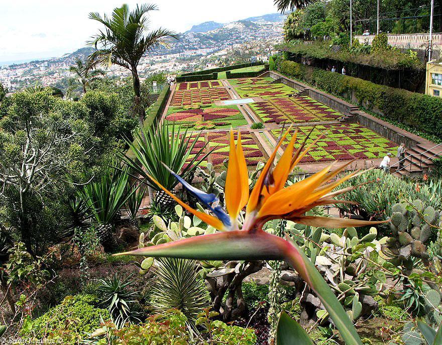 Sangrando en verde adoran al dios sol for Jardin botanico de tenerife
