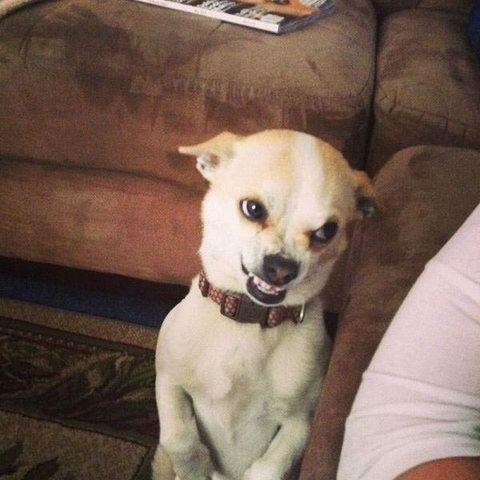 Best Dog Memes Viral Online 2