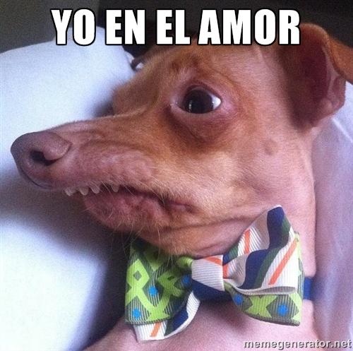 meme yo en el amor perro chihuahua