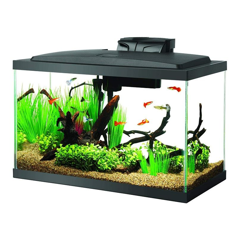 Betta Fish Tank Size - Aqueon Aquarium Fish Tank