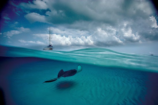Underwater photography by David Doubilet