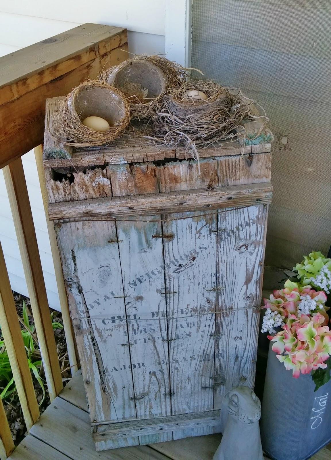 bird's nests
