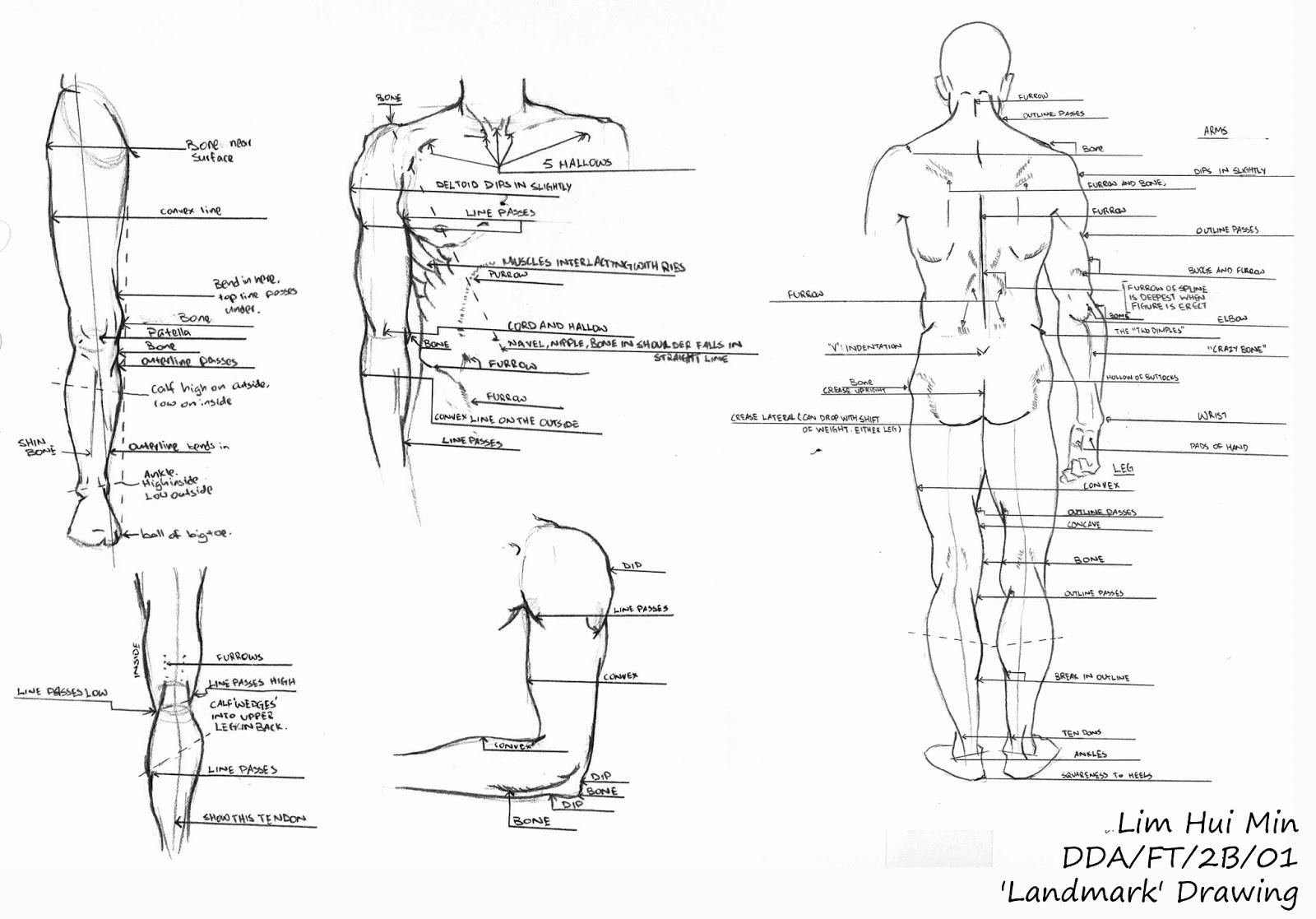 Lim Hui Min Portfolio: Figure Drawing: Landmark Drawing