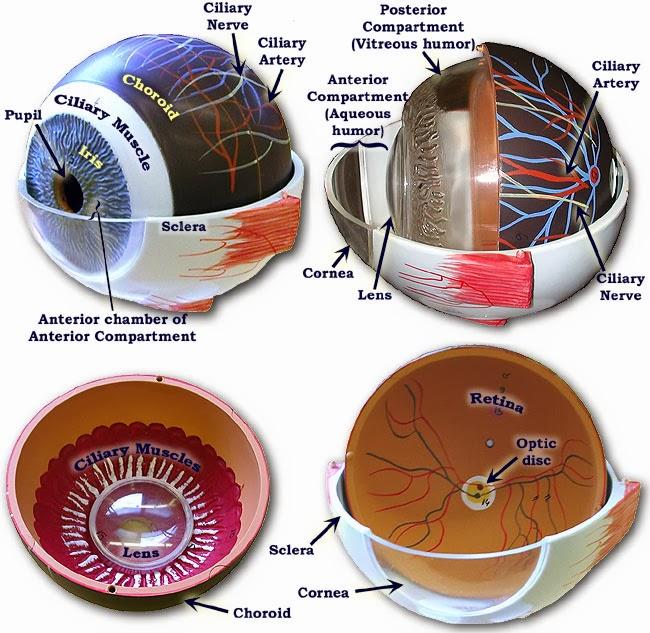 February 2014 ~ optometry blog