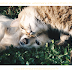 J'ai testé... la formation d'aromathérapie vétérinaire d'Aroma Prêts Partez