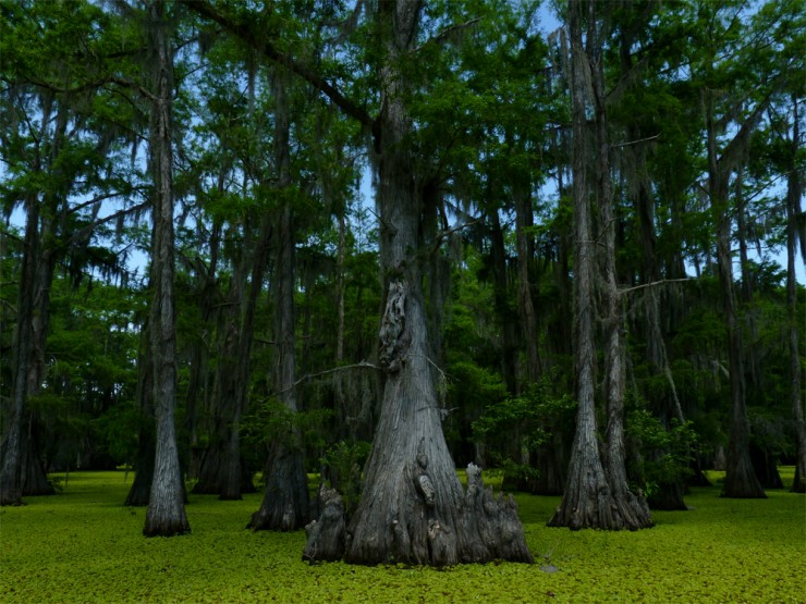 Top 10 Natural Wonders in North America - Caddo Lake, Texas and Louisiana, USA