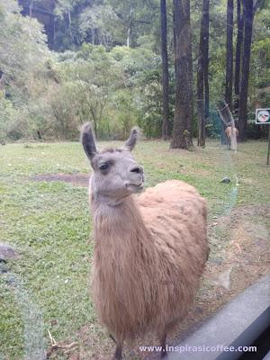 hewan langka di Taman Safari Prigen