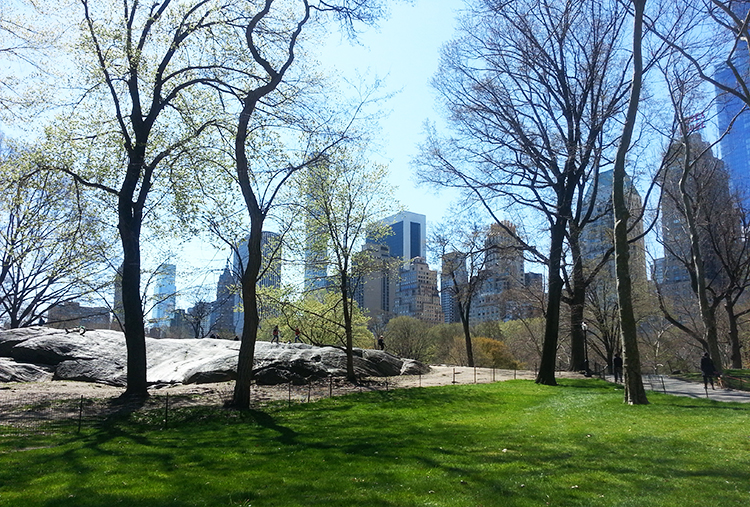 Parc à New York et buildings