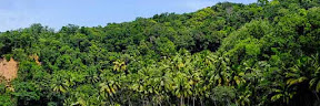 Bagi anda yang ketika ini sedang berkeinginan menghabiskan libur selesai pekan di pantai Tempat Wisata Terbaik Yang Ada Di Indonesia: Wisata Pantai Sambolo Banten, Pantai Pasir Putih yang Mempesona