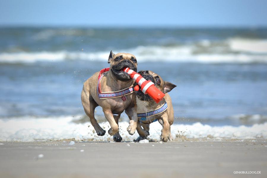 Hunde schwimmendes Wasserspielzeug Rogz Leuchtturm
