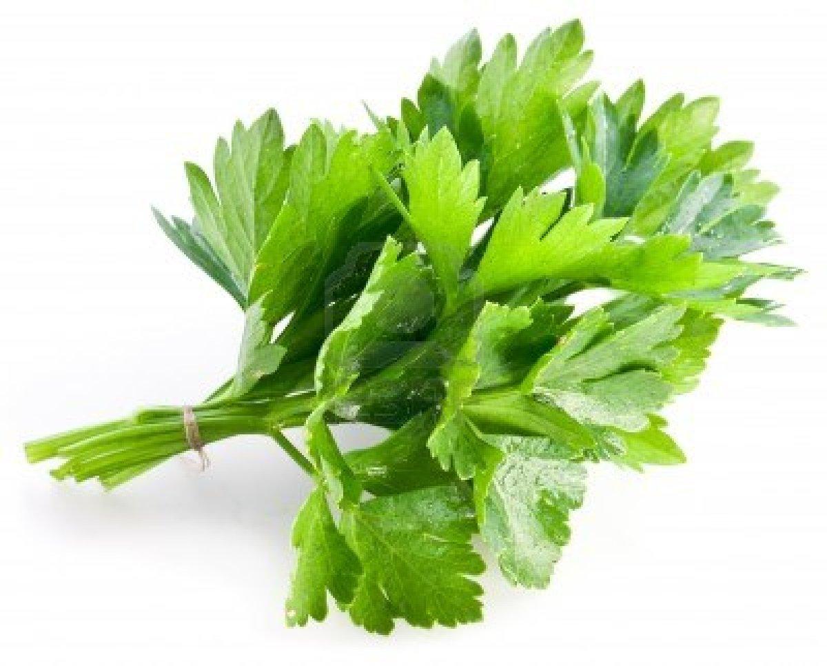 El jard n de judith cilantro para bajar de peso y ayudar for Planta decorativa con propiedades medicinales crucigrama