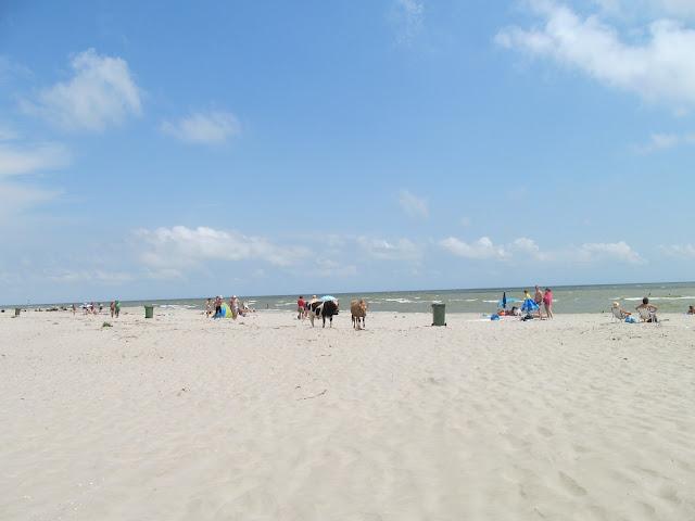 plaja din sfantu gheorghe
