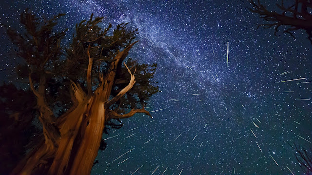 Perseid Meteors over Ancient Bristlecone Pine Forest