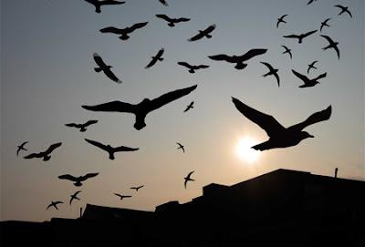 Ungkap Rahasia Memikat dan Menginapkan Ratusan Burung Walet Dalam Sehari