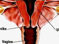 Waspadai Kanker Organ Reproduksi