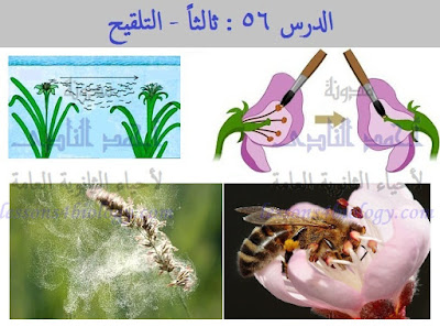 عملية التلقيح فى النباتات الزهرية