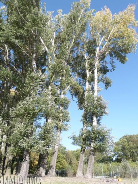 krajobraz -drzewa nad jeziorem
