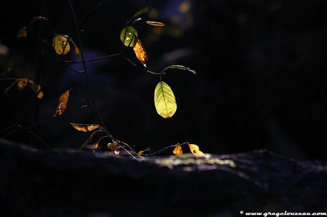 Feuille d'automne, Canche aux Merciers, Trois pignons, (C) 2014 Greg Clouzeau