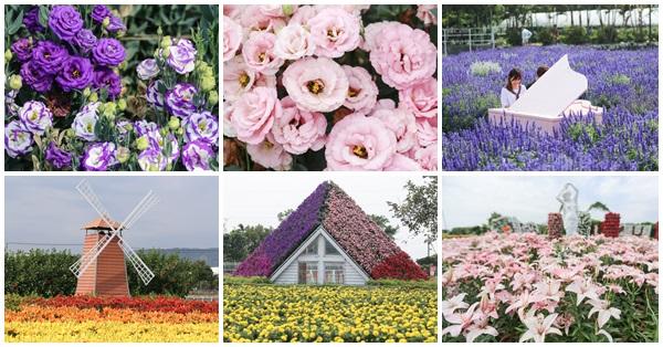 《台中.后里》中社觀光花市-洋桔梗和百合花爭相比美、還有各色花海美翻天
