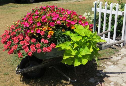 Mason County Garden Tour wheelbarrow planter
