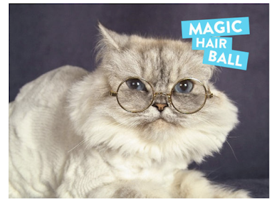 Se você fosse um gato, como você seria ?