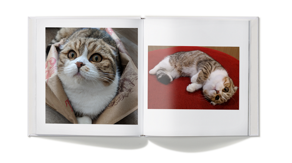Check out Google tips for organizing photos of your pets